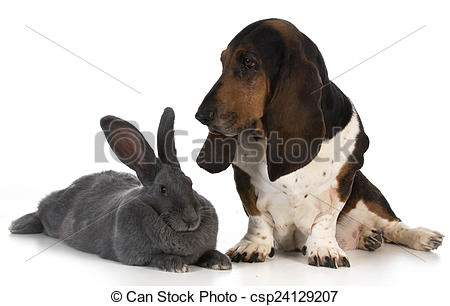 Basset Hound clipart hunting dog Hunting Stock dog of hunting