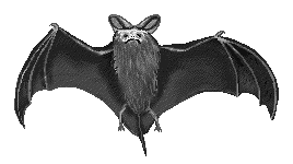 Bat clipart animated Bats s clipart s graphics