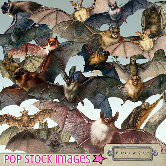 Bat clipart creepy halloween Bat Clipart Vintage Collection from