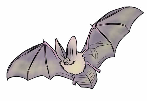 Bat clipart grey Silhouette in bat vampire image