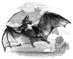 Bat clipart row Vintage Leather Art Vintage Pinterest