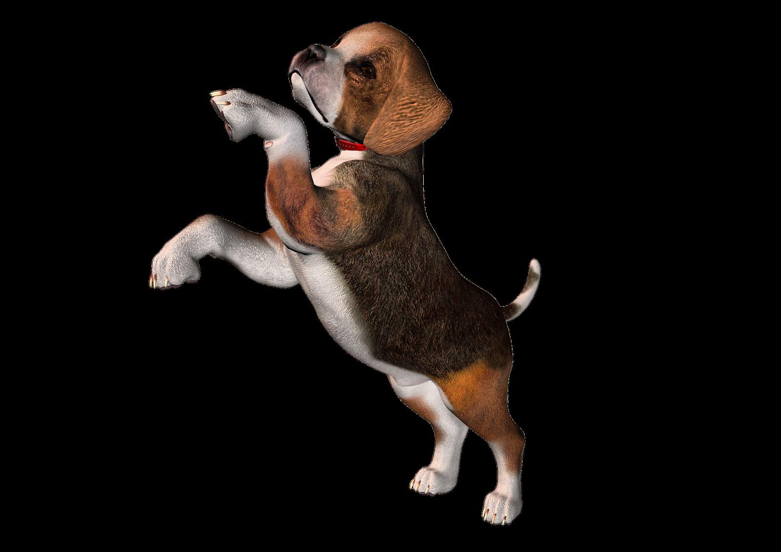 Beagle clipart Beagle Clipart and Cliparts Art