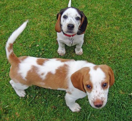 Beagle clipart cute Best 25+ this white ideas