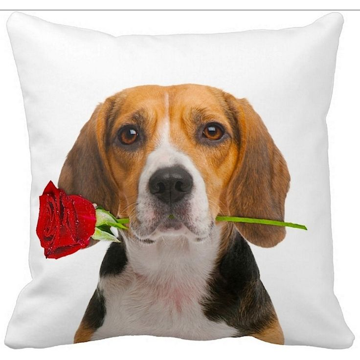 Beagle clipart therapy dog Beagle dog ileesh on 16