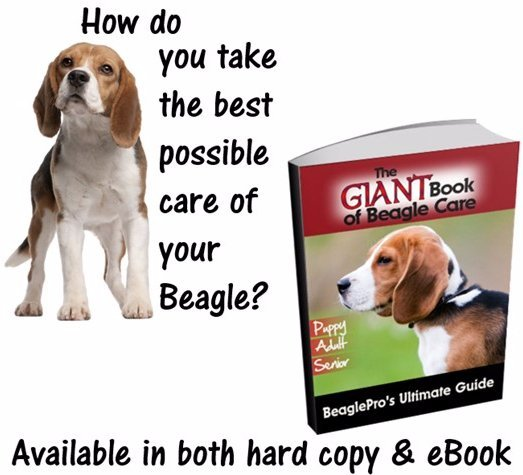 Beagle clipart therapy dog Be We BeaglePro checking this