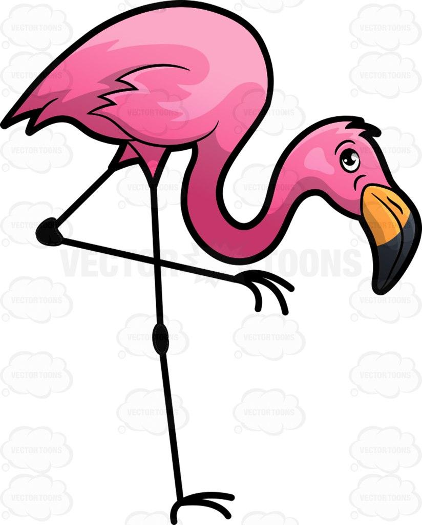 Beak clipart flamingo Flamingo flamingo bird bright :