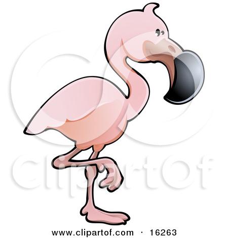 Beak clipart flamingo Adorable Adorable Bird Standing On