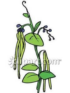 Bean clipart bean plant On Bean Art Clip Plant