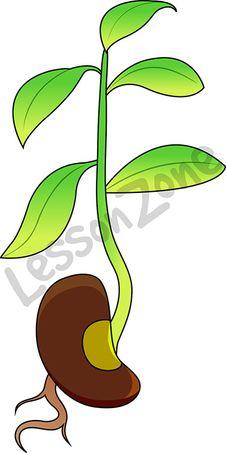 Bean clipart bean plant Related Suggestions for Bean Art