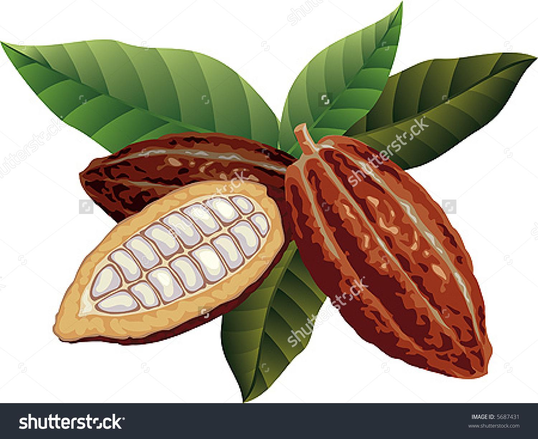 Cacao clipart Clipground pod cliparts Bean clipart