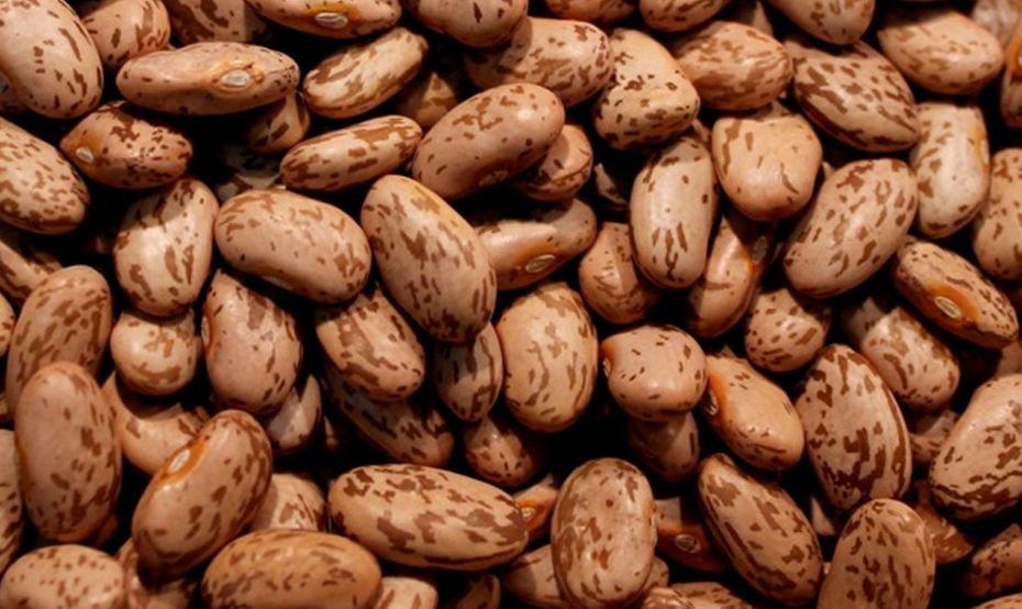 Beans clipart pinto bean Bush Purpose Organic Beans this