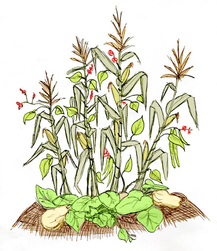 Bean clipart garden plant The Connection Food Gardening