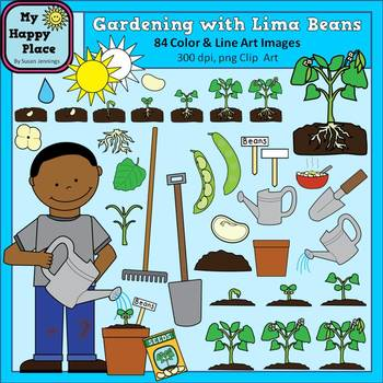 Bean clipart garden plant Of Plant cycles Beans Clip