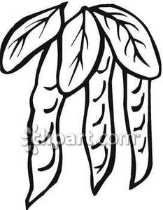 Bean clipart pea plant Clipart On Pods Picture Free
