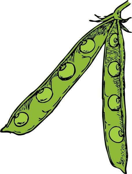 Bean clipart pea plant Free (46 Pod vector