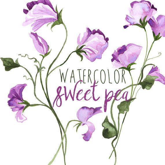 Beans clipart sweet pea Graphics of Border ideas Watercolor