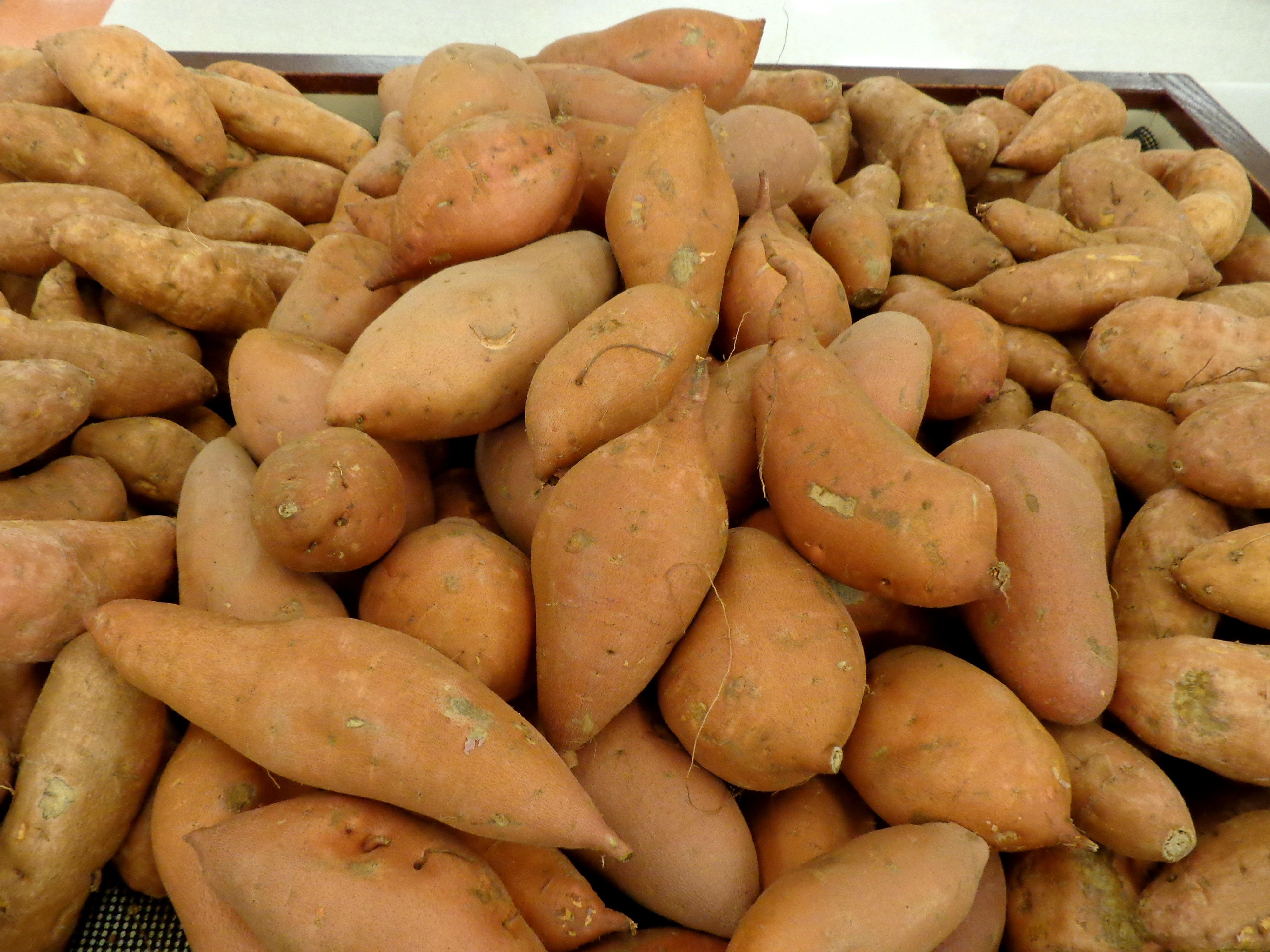 Bean clipart sweet potato Photos Free and Picture Photograph