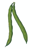 Beans clipart vegetable Clip pages Free Vegetable of