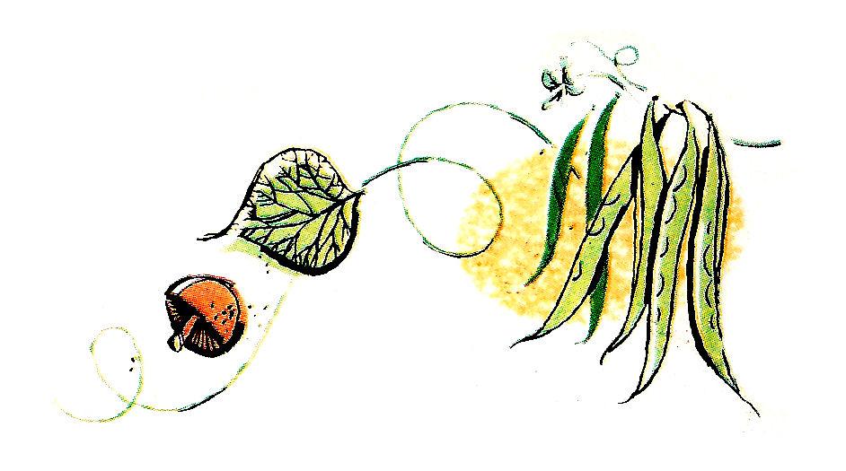 Beans clipart vegetable Leaf Green Clip Digital Beans