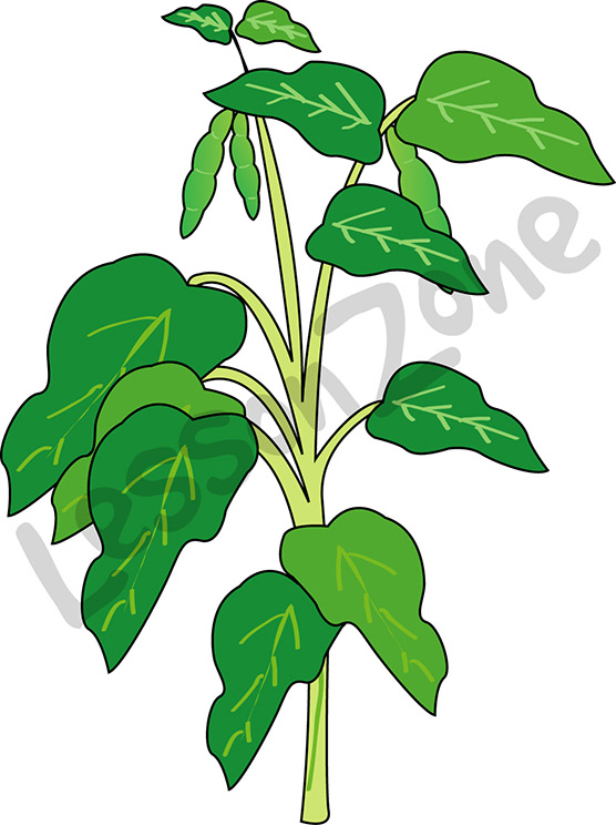 Beans clipart animated Clipart Bean  Plant