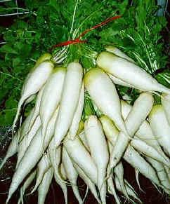 Beans clipart labanos On best Philippines Vegetables Labanos