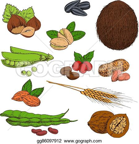 Beans clipart nut Sketches hazelnuts almonds and beans