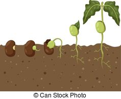 Beans clipart seedling  Bean Clipart Cycle