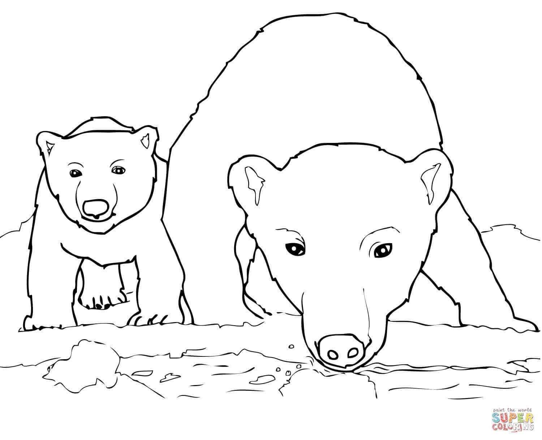 Drawn polar  bear coloring page #14