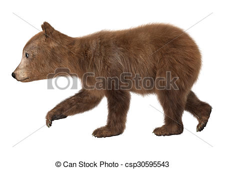 Bear Cub clipart drawn A  cub bear render