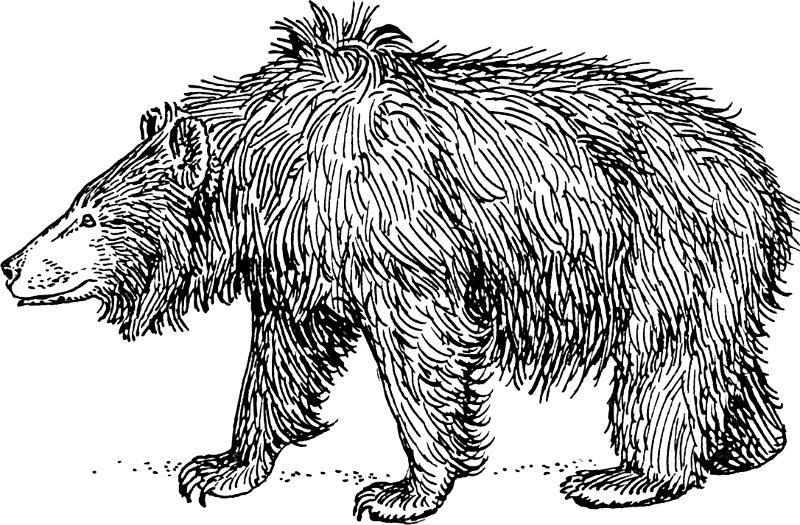 Bear Cub clipart fur Of Art Clipart Free pages