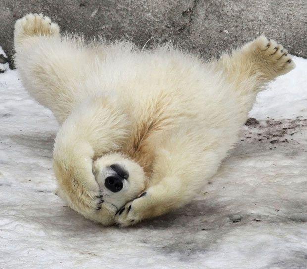 Bear Cub clipart fur Pinterest images Polar on ideas