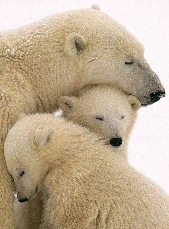 Bear Cub clipart fur Bear Pinterest Best her Polar