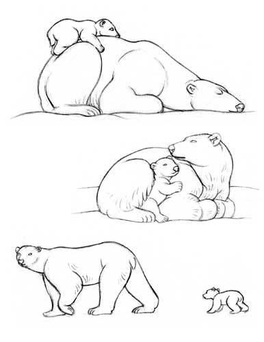 Drawn polar  bear family drawing By polar Search bear a