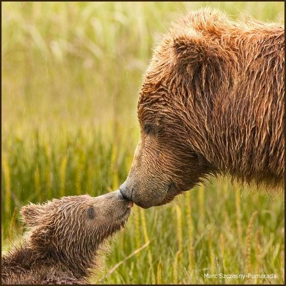 Bear Cub clipart momma Find Pinterest and Bears Pin