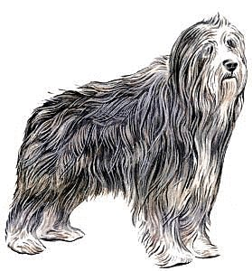Bearded Collie clipart  Clipart Free and Collie