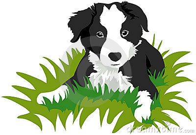 Bearded Collie clipart animated Free Collie collie%20clipart Panda Clipart