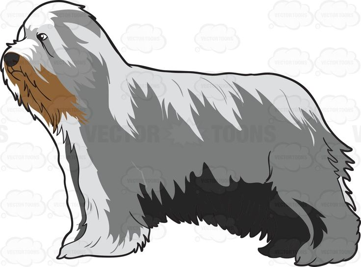 Bearded Collie clipart christmas Bearded 36 on Pinterest images