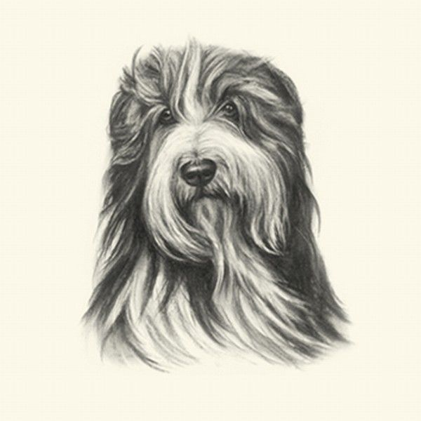 Bearded Collie clipart christmas Silver 25+ clipart no Beard