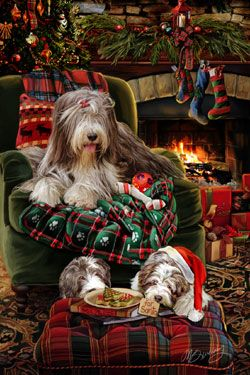 Bearded Collie clipart christmas Christmas Pinterest Christmas about Cards