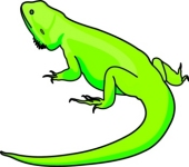 Bearded Dragon clipart And 53 Clip Graphics Dragon