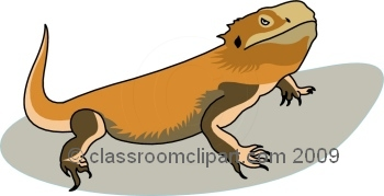 Bearded Dragon clipart head Bearded #2 clipart dragon Dragon
