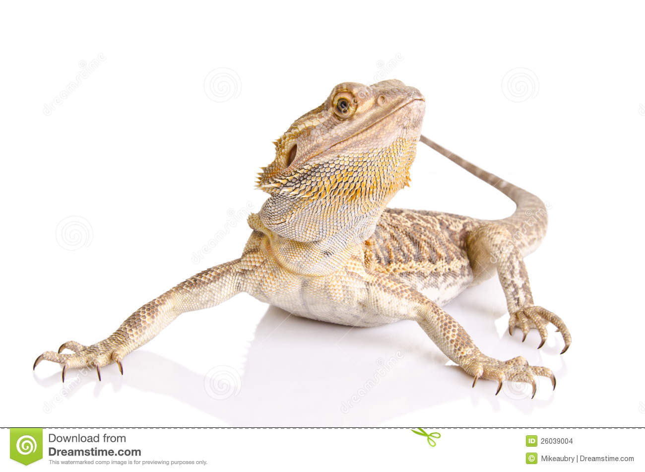 Bearded Dragon clipart head Free Dragon Clipart 91 Clipart