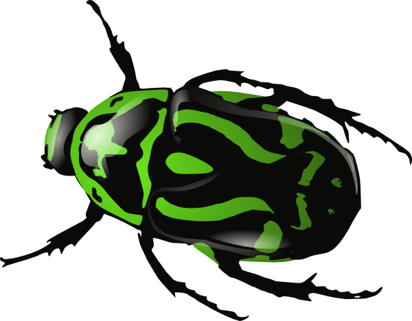 Beelte clipart scarab beetle Download clipart Download Beetle drawings
