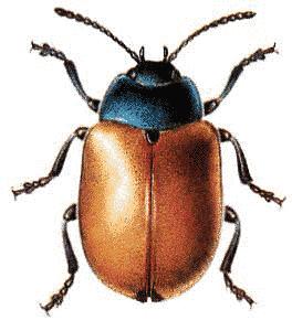 Beelte clipart bug Red Download Leaf Page Art