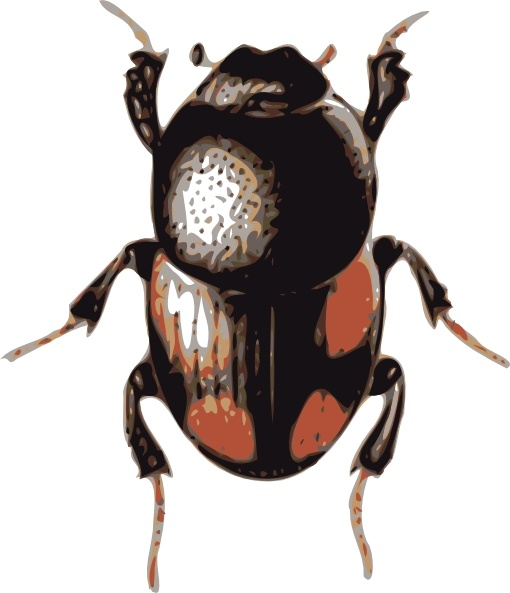 Beetle clipart Open art clip drawing in