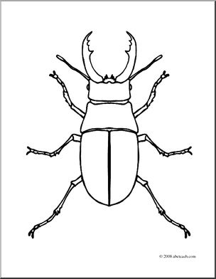 Beatle clipart outline (coloring abcteach I com Insects: