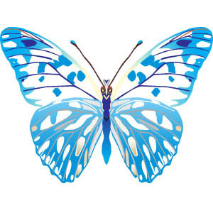 Beautiful clipart blue butterfly Blue Free butterfly  clipart