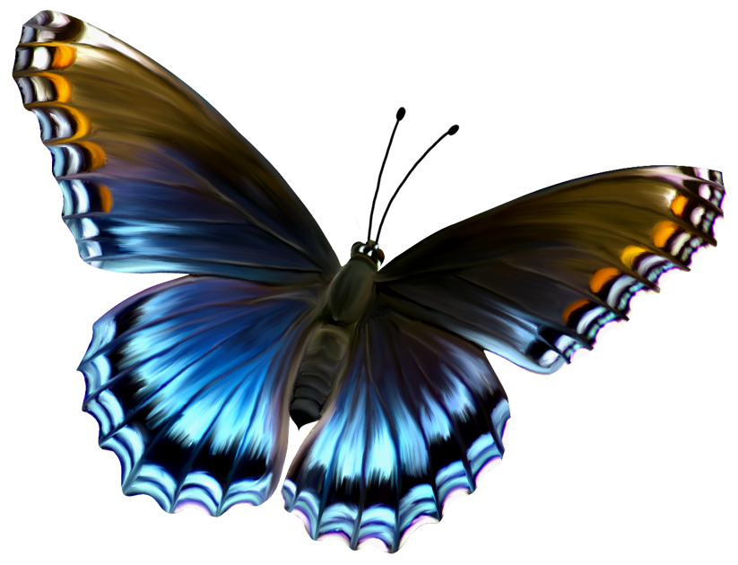 Butterfly clipart mariposa Beautiful Pictures Butterfly Blue Clip