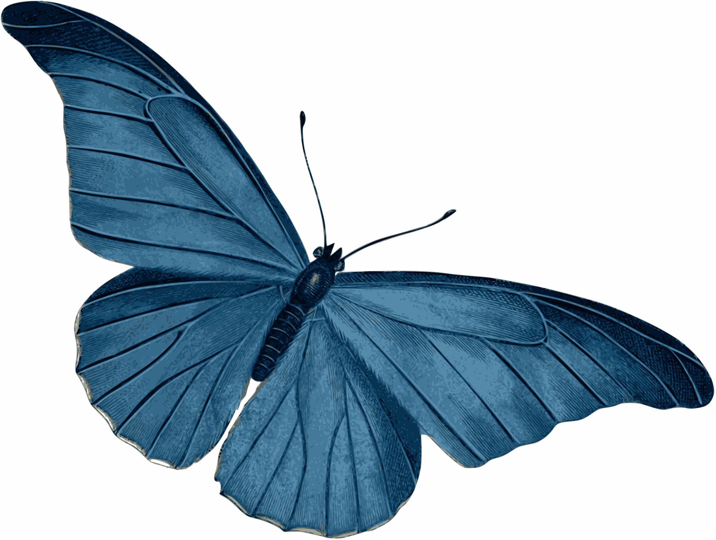 Beautiful clipart blue butterfly Blue Butterfly Butterfly Blue Clipart