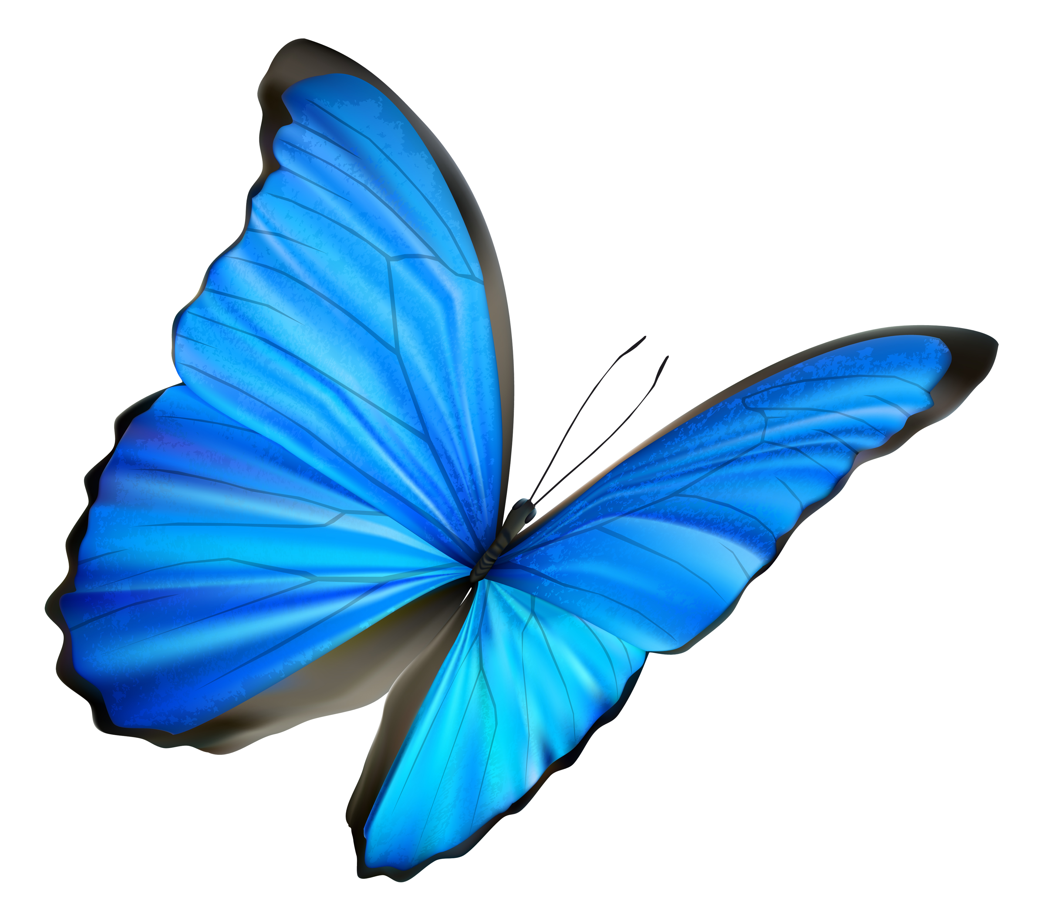 Beautiful clipart blue butterfly Podcast Blue Blue Clip Pictures